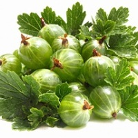agrisul planta medicinala-gooseberries herb