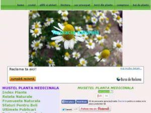 musetel planta medicinala