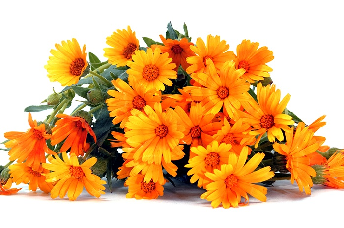 Galbenele planta medicinala-calendula (marigold ) herb