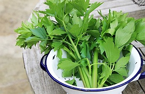 leustean planta medicinala-herb lovage