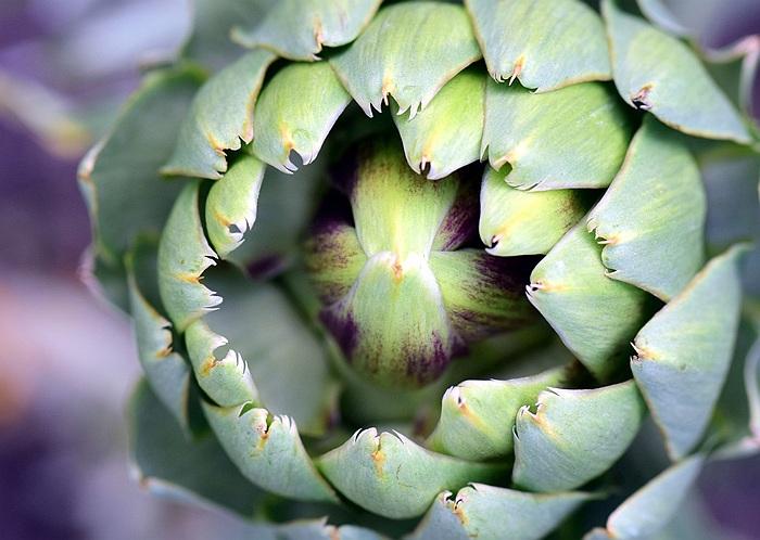 anghinarea planta medicinala