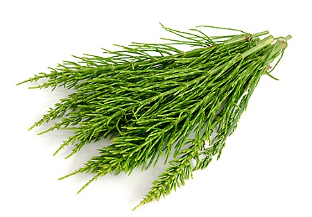 coada calului planta medicinala-horsetail herb