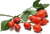 Dog rose herb
